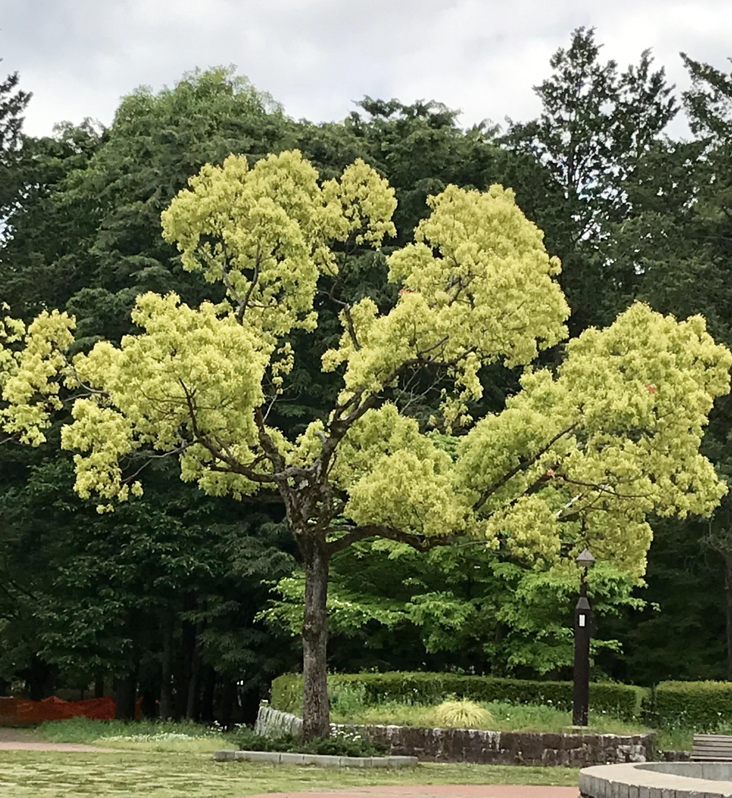 新緑の木立ち